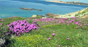 Isola Rossa, Sardaigne, Italie. Auteur et Copyright Marco Ramerini