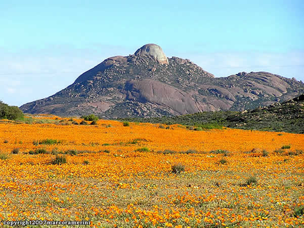 Namaqualand, Afrique du Sud. Author and Copyright Marco Ramerini..