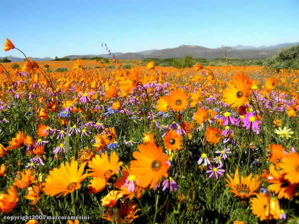 Namaqualand, Afrique du Sud. Author and Copyright Marco Ramerini