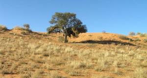 Désert du Kalahari, Kgalagadi Transfrontier Park, Afrique du Sud. Author and Copyright Marco Ramerini