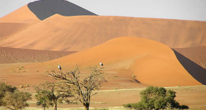Désert du Namib, Namib-Naukluft, Namibie. Author and Copyright Marco Ramerini