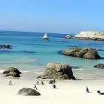 Pingouins à Foxy Beach, Boulders, Le Cap, Afrique du Sud. Auteur et Copyright: Marco Ramerini