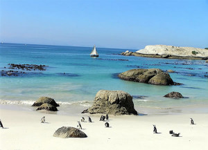Penguins à Foxy Beach, Boulders, Le Cap, Afrique du Sud. Auteur et Copyright: Marco Ramerini