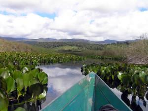 Marimbus Pantanal, Bahia, Brésil. Author and Copyright Marco Ramerini..