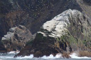 Oiseaux marins, Cap Horn, Chili. Auteur et Copyright Marco Ramerini.