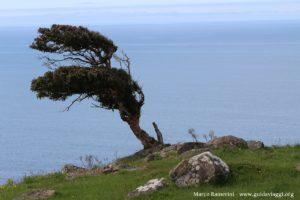 Arbre, Catlins, Nouvelle-Zélande. Auteur et Copyright Marco Ramerini