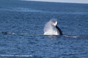 Baleines, Doubtful Sound, Nouvelle-Zélande. Auteur et Copyright Marco Ramerini