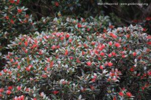 Fleurs, Doubtful Sound, Nouvelle-Zélande. Auteur et Copyright Marco Ramerini