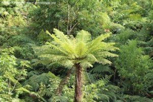 Végétation, Doubtful Sound, Nouvelle-Zélande. Auteur et Copyright Marco Ramerini