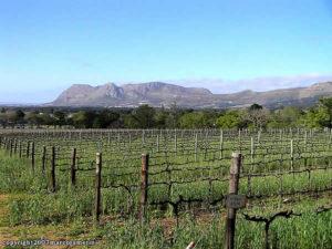 Vignobles de Groot Constantia, Le Cap, Afrique du Sud. Auteur Marco Ramerini
