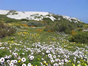 West Coast National Park, Afrique du Sud. Auteur et Copyright Marco Ramerini.
