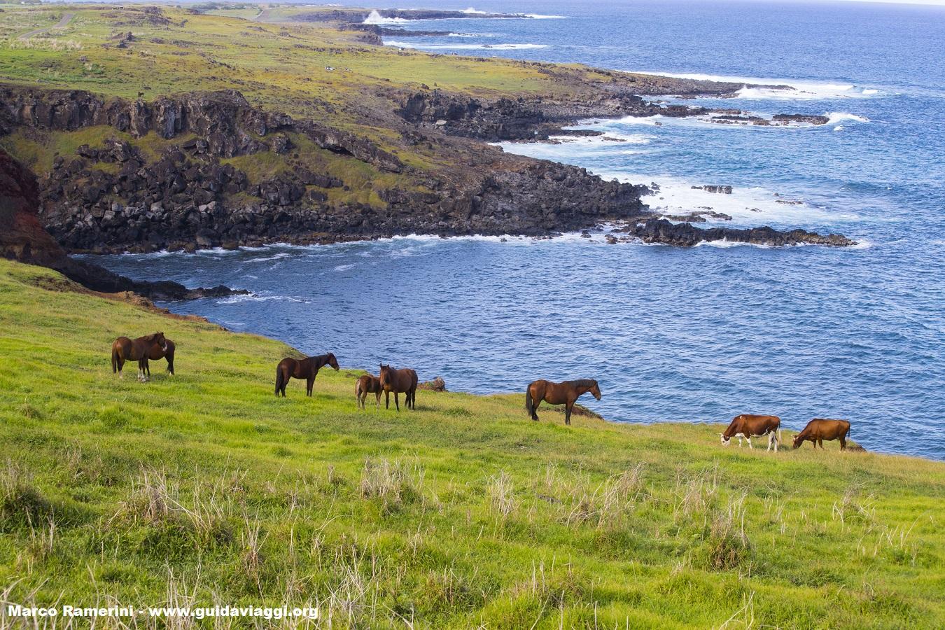 Chevaux, Île de Pâques, Chili. Auteur et Copyright Marco Ramerini