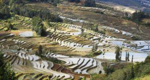 Rizières, Yuanyang, Yunnan, Chine. Auteur et Copyright Marco Ramerini