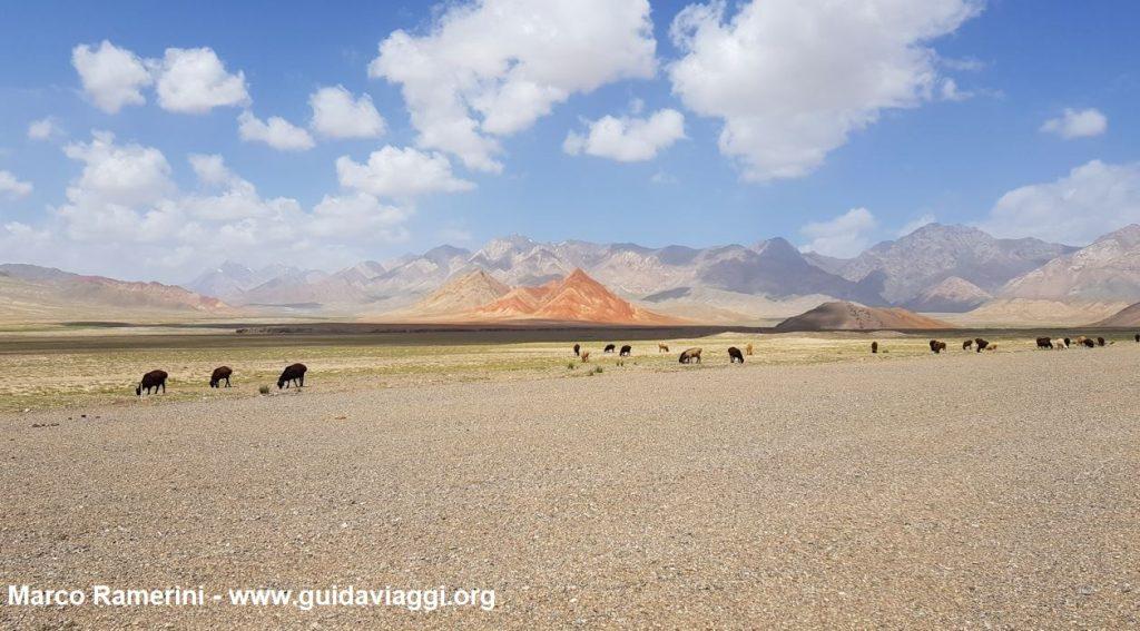 Animaux paissant après la frontière entre le Kirghizistan et la Chine. Auteur et Copyright Marco Ramerini