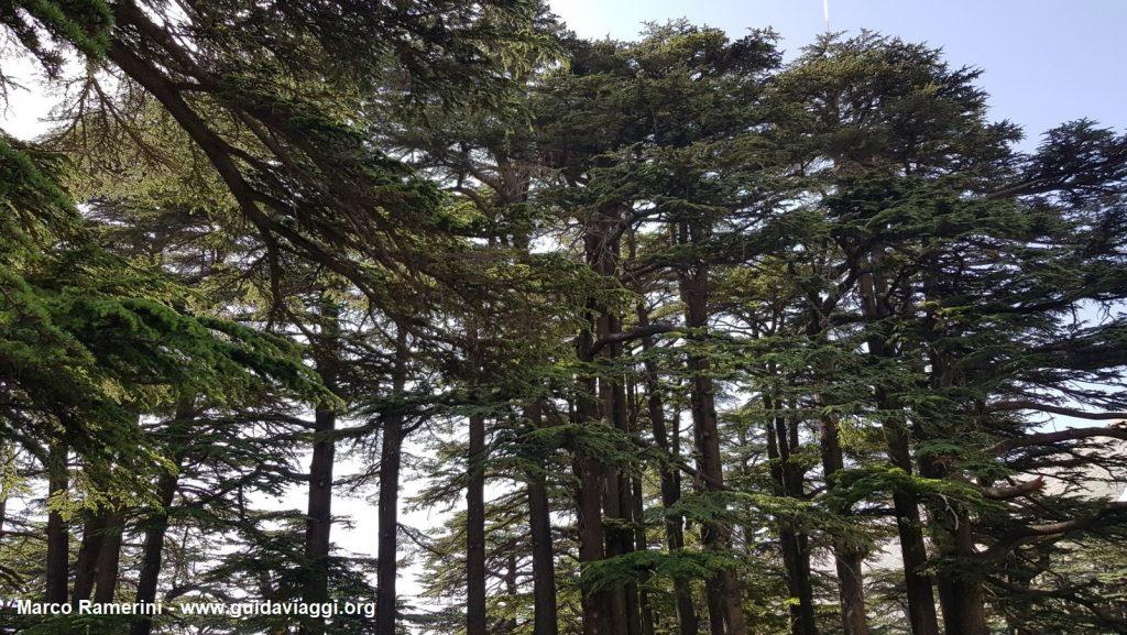 La forêt des cèdres de Dieu, Liban. Auteur et Copyright Marco Ramerini